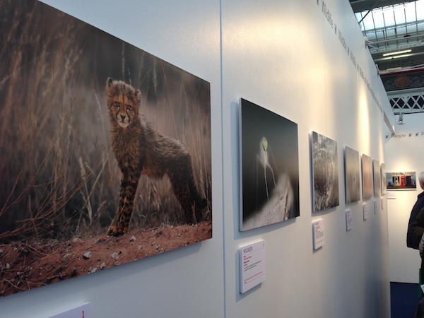 Travel photo of the year exhibition