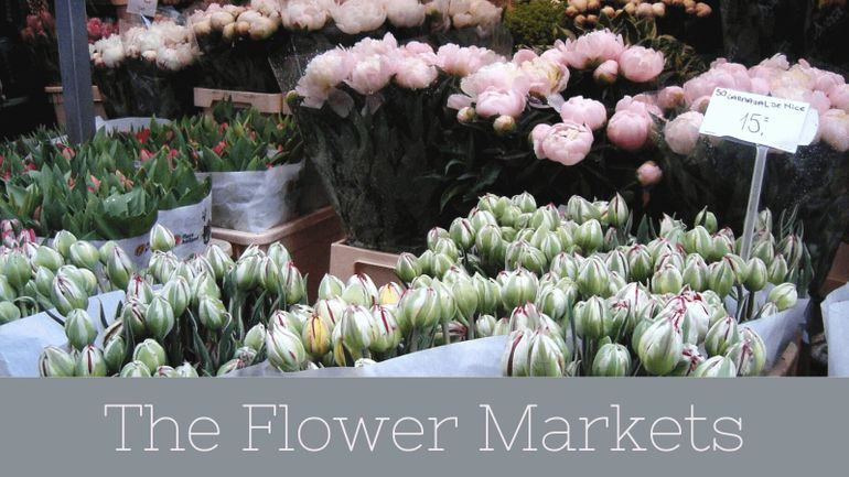 Looking for something free to do on your 3 days in Amsterdam? Visit the gorgeous Flower Market!