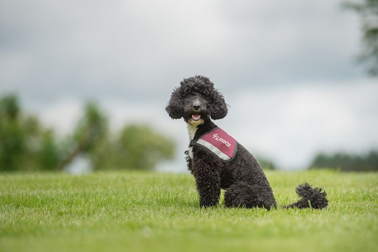 Hearing Dogs for Deaf People work hard to match deaf people with the perfect hearing dog