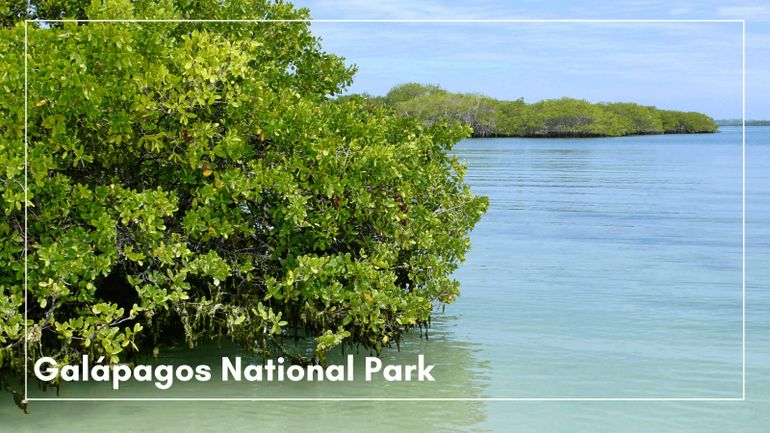 A post about UNESCO sites wouldn't be complete without mentioning Galapagos National Park