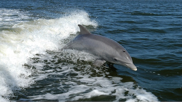 want to see the dolphins? Book a staycation in Pembrokeshire or the Highlands!
