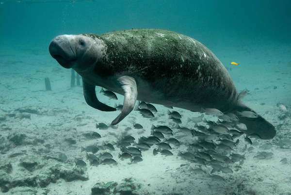Manatees, Turtles, Octopus and Bison are just a few of the animals suffering at the hands of over tourism