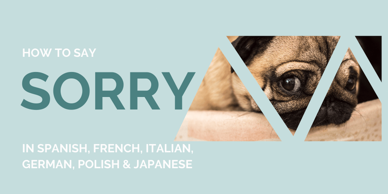 Discover how you say Sorry in 6 different languages