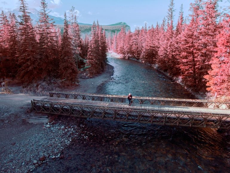 Look at those red trees!! This is one of the reasons that Canada is on Franki's travel bucket list