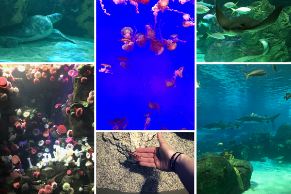 Please your inner child with a trip to Ripley's Aqaurium, one of the 7 must visit spots in Toronto